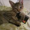 Catcreditcard2